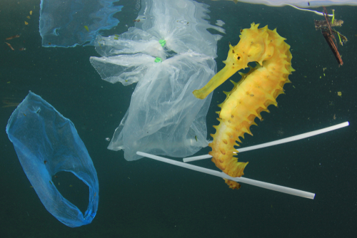 Impact of plastic packaging and how R&D could provide a solution